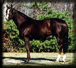 COLONEL RUGER  ~  AQHA Stallion