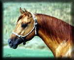 HOLLYWOOD DRIVE, AQHA Stallion
